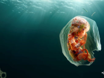 The first Plastic Health Summit in the world