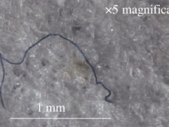 Microplastic fibers found in amphipods in deepest point of the ocean