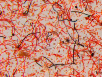 Up to 878 tonnes of synthetic microfibers end up in our oceans every year